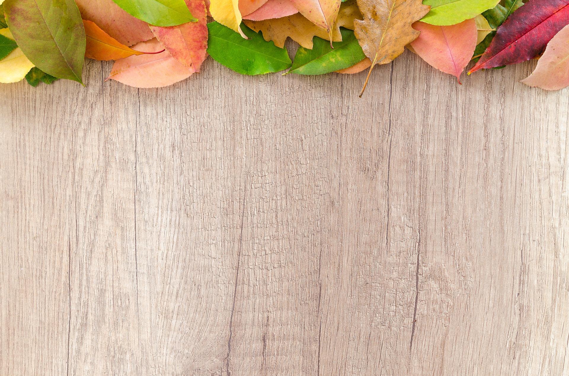 autumn-2902546_1920